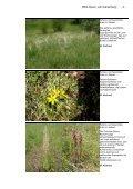 NSG-Album - Landesamt für Umwelt, Wasserwirtschaft und ... - Page 5