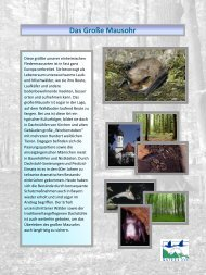 Poster-Serie FFH-Arten