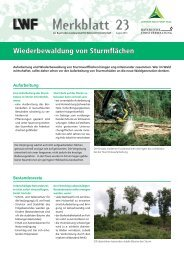 Wiederbewaldung von Sturmflächen. - Bayerische Landesanstalt für ...