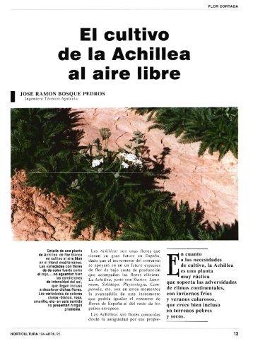 1 cultivo de Achillea al