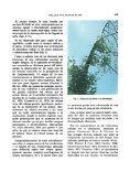 Exudaciones gomosas en alisos (Alnus glutinosa (L.) Gaertner ... - Page 3