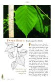Birches, Hophornbean, Hornbeam, Alder, and Beech - Maine.gov - Page 3