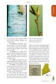 Birches, Hophornbean, Hornbeam, Alder, and Beech - Maine.gov - Page 4