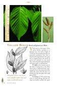 Birches, Hophornbean, Hornbeam, Alder, and Beech - Maine.gov - Page 7