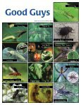 Earth-wise Guide to Beneficial Insects - Maine.gov - Page 2