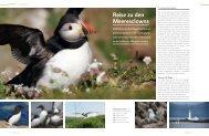 seaside_papageitaucher_62_d.pdf (PDF, 2.94 MB)