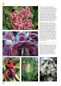 Neues und Bewährtes aus dem Haus- & Wildgarten - Maschinenring - Page 6