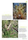 Neues und Bewährtes aus dem Haus- & Wildgarten - Maschinenring - Seite 5