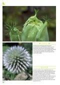 Neues und Bewährtes aus dem Haus- & Wildgarten - Maschinenring - Seite 6