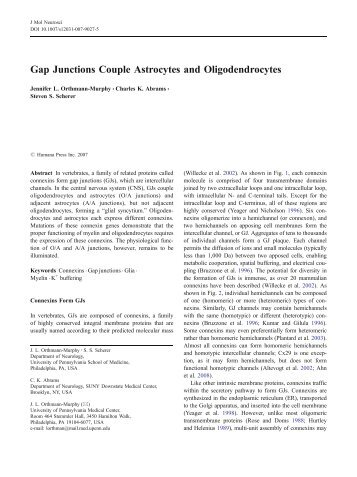 Gap Junctions Couple Astrocytes and Oligodendrocytes