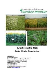 Zwischenfruchtanbau 2009 Futter f