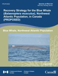 Balaenoptera musculus - Blue Whale Alliance