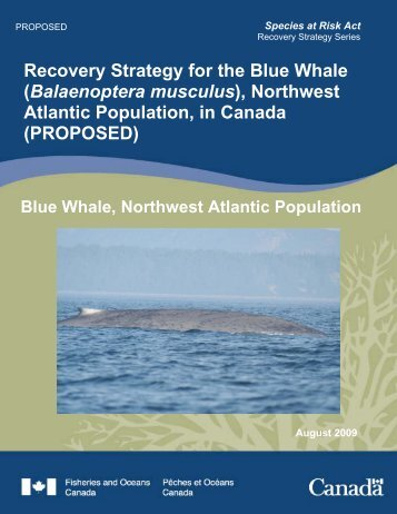 Balaenoptera musculus - Blue Whale Alliance