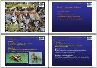 Invasive Flusskrebse in Hessen - Naturschutz-Akademie Hessen