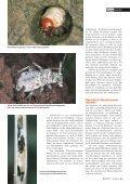 21-25 Flatterhaft.qxd - Natürlich - Page 3