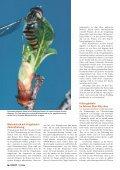 21-25 Flatterhaft.qxd - Natürlich - Page 4
