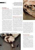 20-25 Hornissen - Natürlich - Page 3