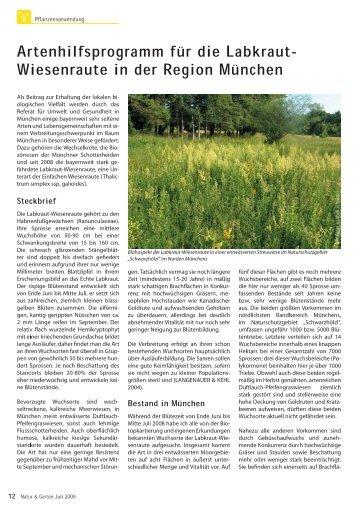 Artenhilfsprogramm für die Labkraut-Wiesenraute in München