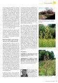 Artenhilfsprogramm für die Labkraut-Wiesenraute in München - Seite 2