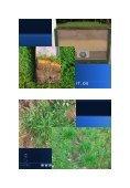 Alternativen zur chemischen Beikrautbekämpfung ... - Natur im Garten - Page 5