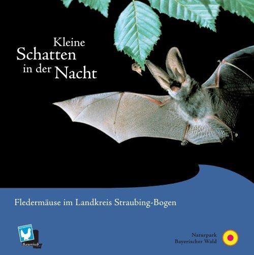 Fledermäuse-Kleine Schatten der Nacht - Naturpark Bayerischer Wald