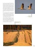 Download Image-Broschüre S. 4-13 - Naturpark Lauenburgische Seen - Seite 2