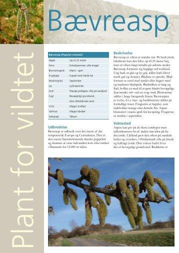 Bævreasp - Naturstyrelsen