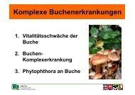 Buchenkomplexerkrankung - Nordwestdeutsche Forstliche ...