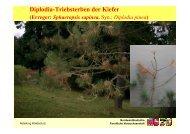 Diplodia Triebsterben - Nordwestdeutsche Forstliche Versuchsanstalt