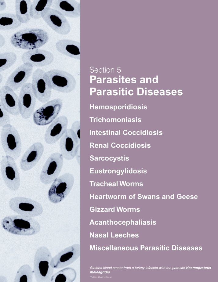 an analysis of the parasitic characteristics Occult blood may be present due to parasitic infections morphologic characteristics of parasites are covered in the lecture component.
