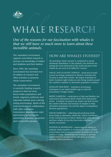 Whale research - fact sheet (PDF - 270 KB )