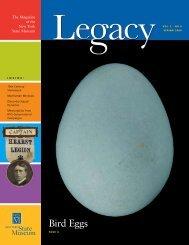 Bird Eggs - New York State Museum