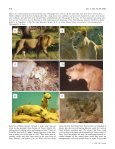 Mane variation in African lions and its social correlates - Page 6