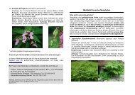 Merkblatt Invasive Neophyten - Oberwil im Simmental