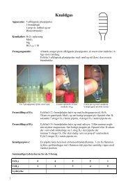 Journaløvelse: Knaldgas
