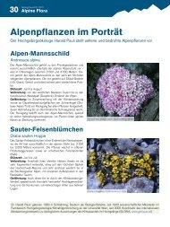 Alpenpflanzen im Porträt - Gebirgsverein