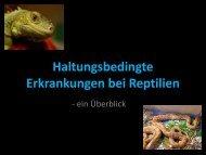 Haltungsbedingte Erkrankungen bei Reptilien