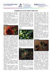 Giftpflanzen in der kalten Jahreszeit - Dr. Hüwer