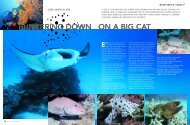 BUNKERING DOWN ON A BIG CAT - Dive The Blue . net
