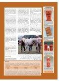 Tierarzt Pferdehaltung Ausrüstung - Euroriding - Seite 7