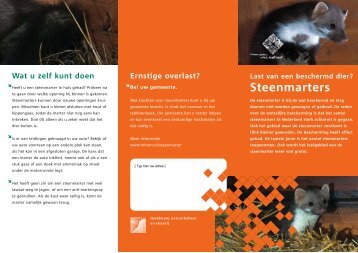 Steenmarters - Gemeente Dalfsen