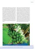 Das krumme Ding mit der Banane - FairTrade e.V. - Seite 5