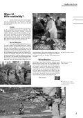 Newsletter Januar 2007 - Onesimo - Seite 5
