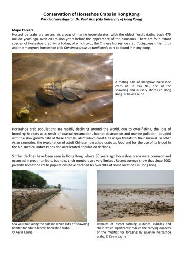 Conservation of Horseshoe Crabs in Hong Kong
