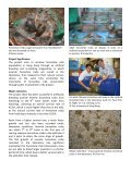 Conservation of Horseshoe Crabs in Hong Kong - Page 2