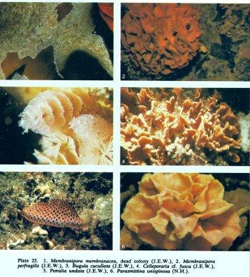 Plates 25-28 - The Bryozoa Home Page