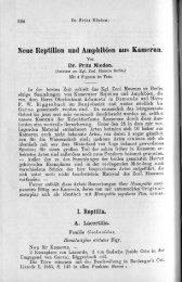Neue Reptilien und Amphibien aus Kamerun. - african amphibians ...