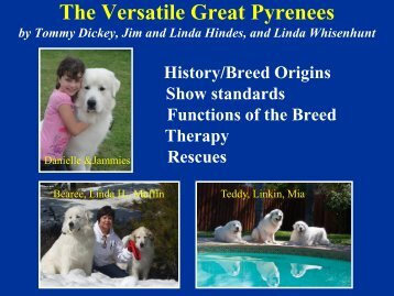 The Versatile Great Pyrenees