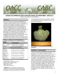 Evergreen BOTTELAGE oignon Graines 300 graines Non-OGM