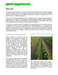 Prévenir les éclosions à E. coli O157 dans les légumes feuilles - Page 3